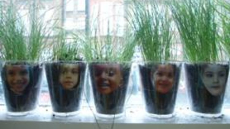 Let's Grow! Pines Classes