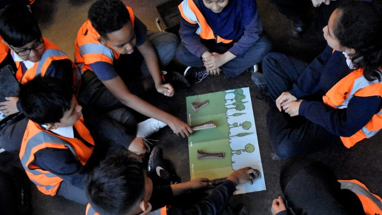 Evolution workshop at the Natural History Museum – Year 6