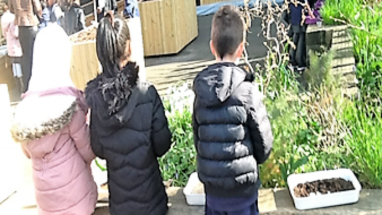 Science and gardening – Year 2