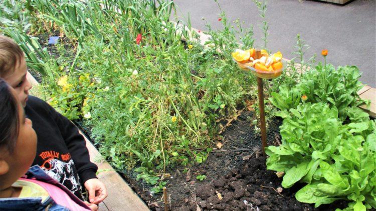 Year 1 – Butterfly gardening!