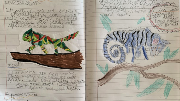 Non-chronological reports – Year 4